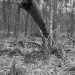 dode-bomen-4438