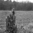 dode-bomen-4444