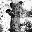 dode-bomen-4447