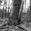 dode-bomen-4453