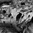 dode-bomen-4460