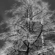 dode-bomen-5332