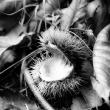 herfstbeelden-21-10-2012-0774